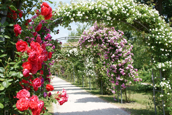Parcours Achtsamkeit im Rosengarten