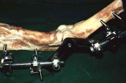 Kadaveruntersuchung mit einer Bewegungsbacke für den Fixateur externe, vollständige Banddurchtrennung